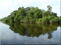 SO8454 : Trees reflected in the River Severn by Philip Halling