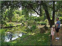 TQ2882 : Pond in Queen Mary's Gardens, Regent's Park by Paul Harrop