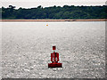 SZ4999 : The Solent, Bourne Gap Channel Marker Buoy by David Dixon