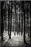SJ9344 : Park Hall Forest (winter) by Brian Deegan