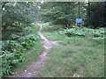 SU9486 : Permissive path in Egypt Woods by David Hawgood