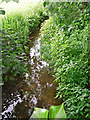 NY4459 : Willow Beck by Rose and Trev Clough