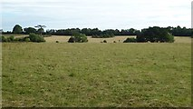 SO8845 : View to the Belt, Croome Park by Philip Halling