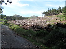 J3630 : Cut over section of forest in Donard Wood by Eric Jones