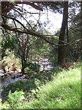 J3629 : The Glen River in Donard Wood by Eric Jones