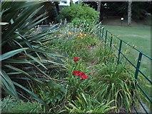 TR1457 : Flowerbed in Dane John Park, Canterbury by David Howard