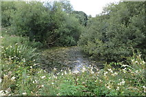 SP6830 : Pond by the footpath by Philip Jeffrey