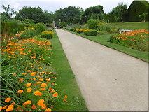 TQ5243 : The Jubilee Walk, Penshurst Place by Marathon