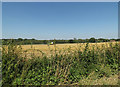 TM0487 : Farmland off Banham Road by Adrian Cable