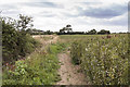 SK9553 : Footpath along a bean field by Julian P Guffogg