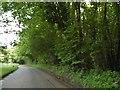 TR0249 : White Hill, near Challock by David Howard