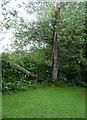 TR2043 : Storm-damaged tree in garden of Winterdown Cottage by John Baker