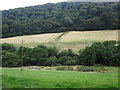 SS8935 : Pheasant rearing by Winn Brook by Hugh Venables