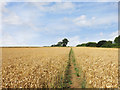 SU3091 : Clear path through wheat by Des Blenkinsopp
