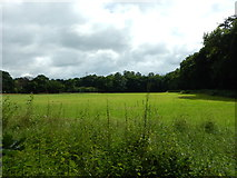 TQ1562 : Field Between Birchwood Lane and the A3 by James Emmans