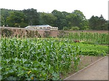 ST5071 : Vegetables in the walled garden, Tyntesfield by David Smith