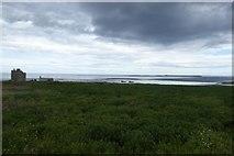 NU2135 : Vegetation on Inner Farne by DS Pugh