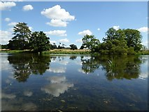 SO8844 : Reflections of clouds and trees by Philip Halling