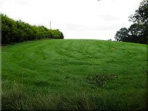 H5574 : A grassy hill, Merchantstown Glebe by Kenneth  Allen