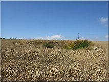 ST6700 : Chalk Pit near Black Hole Farm by Becky Williamson