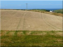 SC2785 : Partially harvested barley field, north of Lhergydhoo Lane by Christine Johnstone