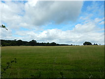 TQ1463 : Fields near Claygate by James Emmans