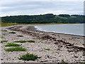 NX0468 : The Shore at Loch Ryan by David Dixon