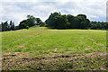 SU9355 : Hazelacre Hill by Alan Hunt