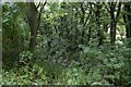 NZ4051 : Cherry Knowle Dean by Richard Webb