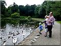 J2458 : Feeding the birds, Hillborough by Kenneth  Allen