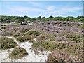 SZ0383 : Studland, heathland by Mike Faherty
