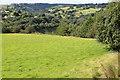 SO1800 : Field adjacent to Sirhowy Valley Walk by M J Roscoe