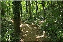 SX8158 : Dart Valley Trail in woodland by Derek Harper