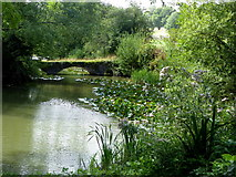 TR0653 : Bridge over the lake at Chilham Castle by pam fray