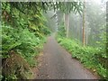NY2328 : Trail in Dodd Wood by Graham Robson