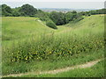 TL0528 : Dry valley in the Sundon Hills Country Park by Peter S