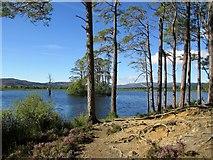 NH9617 : Loch Mallachie by Jennifer Jones