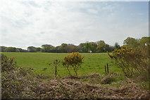 SW9651 : Cornish Countryside by N Chadwick