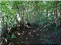 SK1342 : Deepdale Lane in L L L Plantation by Ian Calderwood