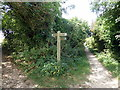 TQ5501 : Footpath Junction Sign by PAUL FARMER