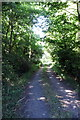TL1347 : Track through Sheerhatch Wood by Philip Jeffrey