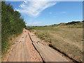 SX9878 : Track on Dawlish Warren by Des Blenkinsopp