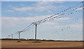 NJ9766 : Flocking Starlings by Anne Burgess
