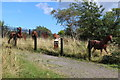 SO2509 : Pit ponies in the sunshine, Blaenavon! by M J Roscoe