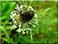 H5171 : Garden spider on plantain weed, Deroran by Kenneth  Allen