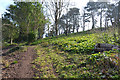 SX9372 : Climbing east in Homeyards Botanical Gardens, Shaldon by Robin Stott