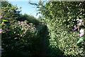 SD7913 : Footpath to Summerseat by Bill Boaden
