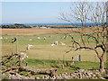 NJ9619 : Alpaca farm by Bill Harrison