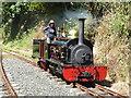 SX2985 : Launceston Steam Railway - Lilian by Chris Allen