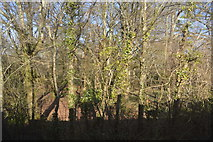 SX4563 : Woodland by the Tamar Valley line by N Chadwick
